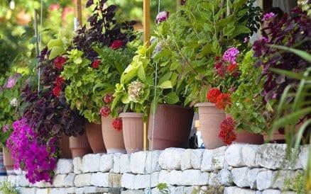 Tuinaanleg: design of liever klassiek? Netjes of wild? Vele mogelijkheden om accenten in uw tuin aan te brengen.