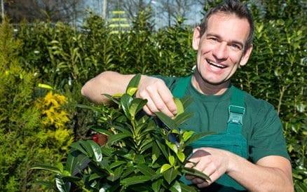 De vakman doet niet alleen de aanleg van een tuin, maar adviseert en levert ook planten, bomen en struiken goedkoper dan een tuincentrum.
